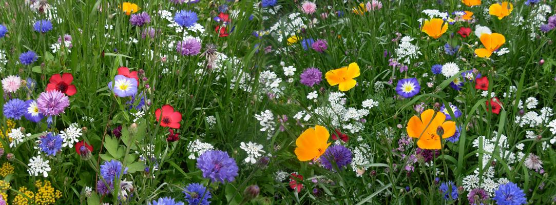Zéro pesticides : Jardiner Autrement