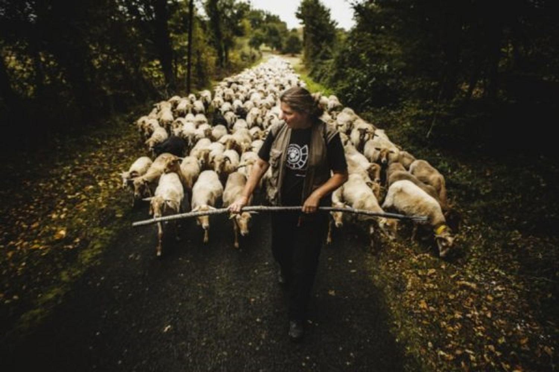 Commande d'agneau de la double à Thérèse avant le 9 décembre